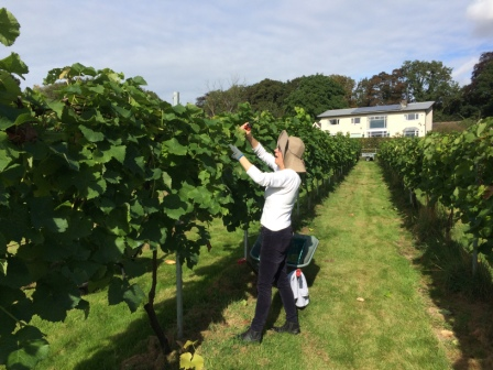 volunteers at Rothley Wine Estate